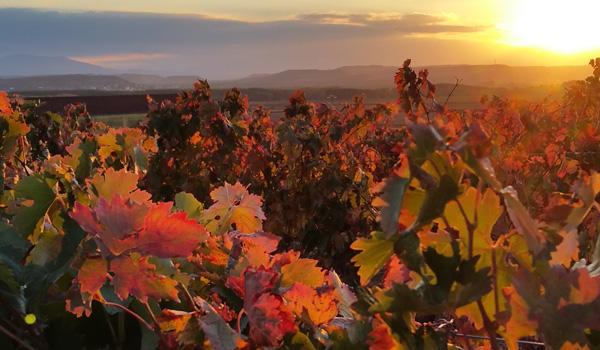 La Rioja #QuédateEnEspaña